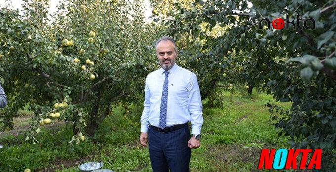 Bursa'da Armut bahçelerinde hasat bereketi